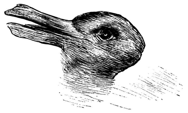 Guarda questo disegno : che animale vedi ?