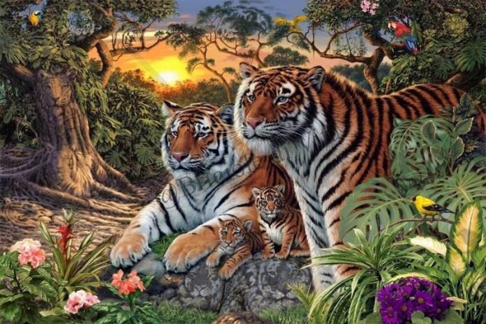 tigri 1