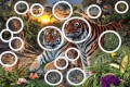 Quante tigri vedete in questa foto? Guardate bene e attentamente!